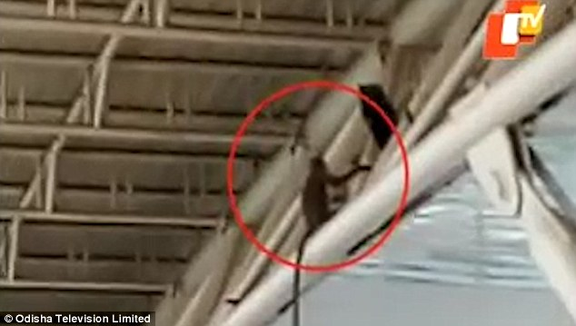 Monyet Berkeliaran di Bandara, Ganggu Penerbangan Hampir Seharian